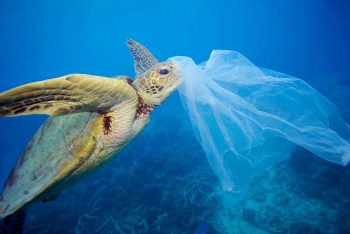 LA PLASTICA UCCIDE GLI OCEANI